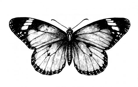 The Butterfly Effect and Me
